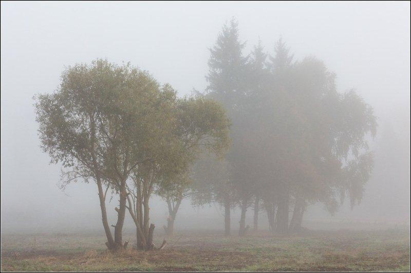 россия, калужская обл В туманной тишинеphoto preview