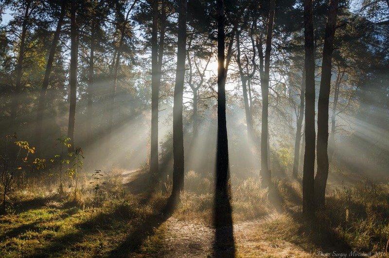 пейзаж, лес,, осень, красиво, утро, листья, туман, лучи, солнце Лучи солнца в лесуphoto preview