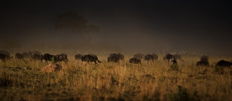 Африканскоеphoto preview