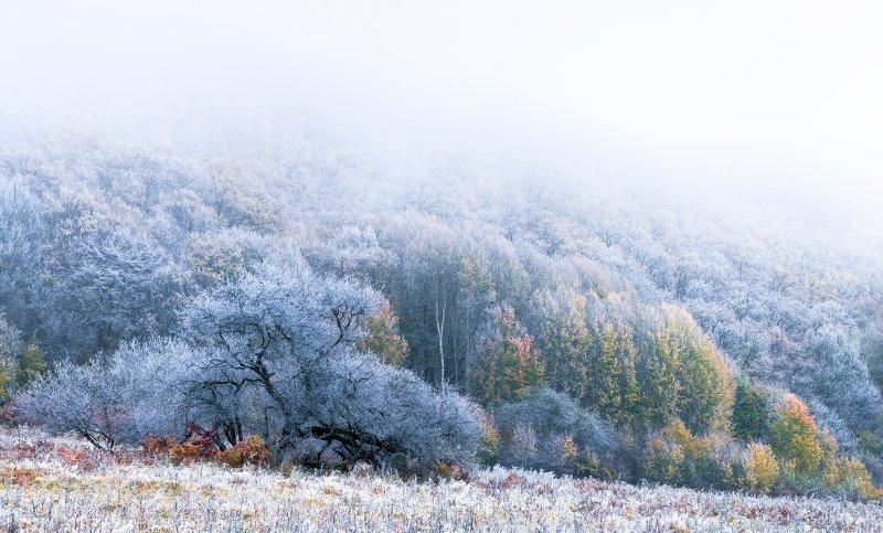 Про позднюю осень и туманное утро...photo preview