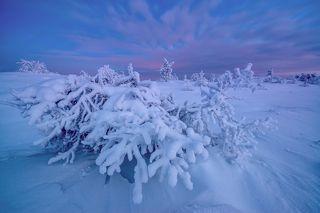 А в Кандалакше уже зима...