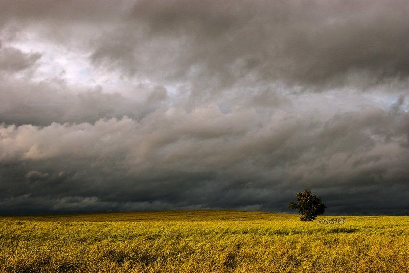 tree, lithuania, nature, wester to take by stormphoto preview