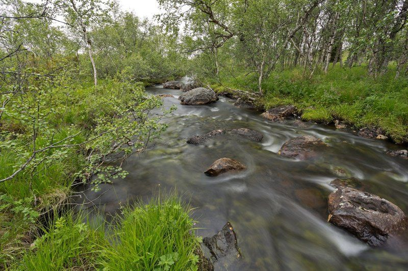 кольский, полуостров, ручей, лето, кайхъявр У ручьяphoto preview