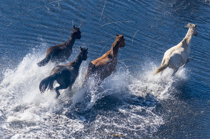 казахстан, мойынкум, чу, река, озеро, лошади, Лошади на озёрахphoto preview