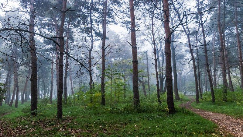 туман, осень Утренний туманphoto preview