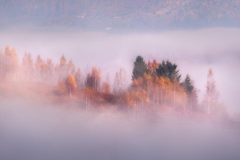 карпаты, туман, осень, рассвет Туманное Adagiophoto preview