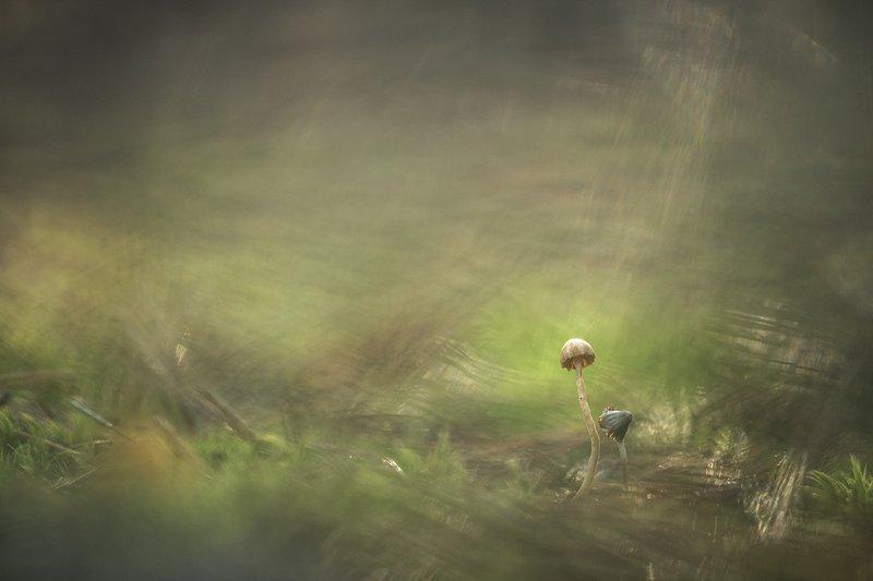 макро, грибы, минимализм, осень, ноябрь,поганки, любовь, позитив, свет, цвет, воронеж, Мы с тобой одна планета...photo preview