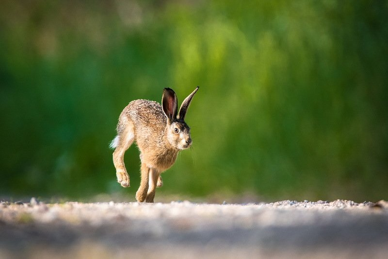 Про зайца.photo preview