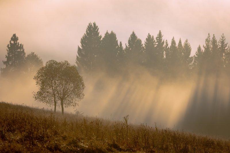 карпаты. осень. туман. рассвет Купание в солнечных лучахphoto preview