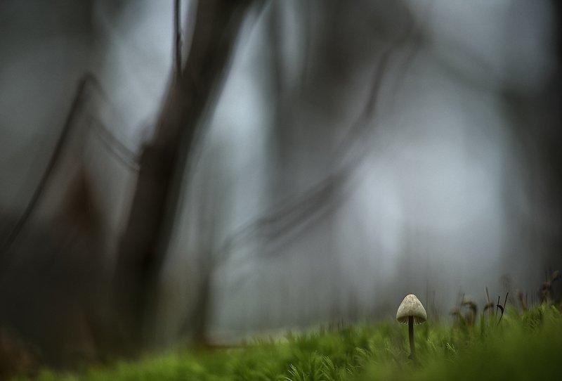 макро, поганка, грибы, осень, ноябрь, лес, мох, настроение, свет, цвет, дремать, воронеж, россия Дремлющий ноябрь...photo preview
