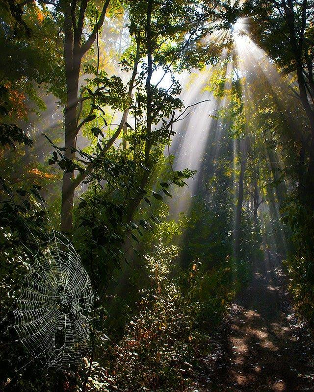 Утром в лесуphoto preview