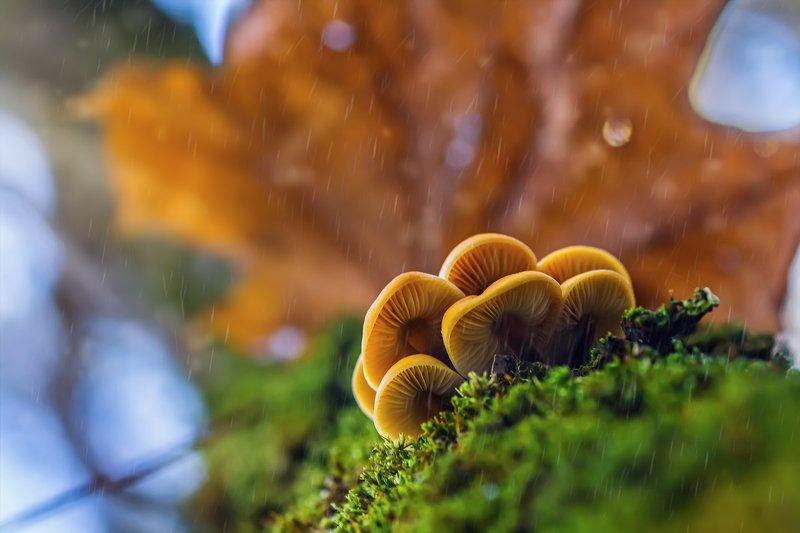 трава,свет,лес,деревья,облака,ветки,небо,гриб ***photo preview