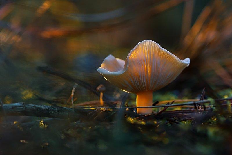 трава,свет,лес,деревья,ветки,небо,гриб,блики,тени ***photo preview