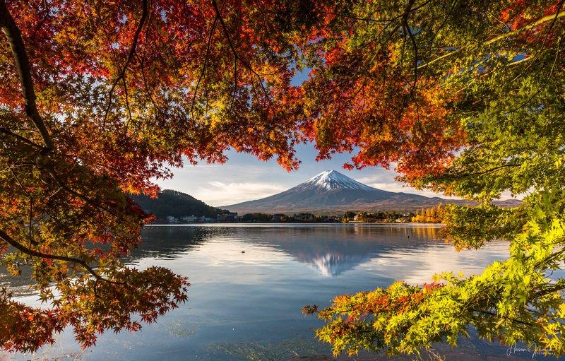 nature landscape japan mountain morning mount fuji  autumn colors 『 Autumn Morning 』photo preview