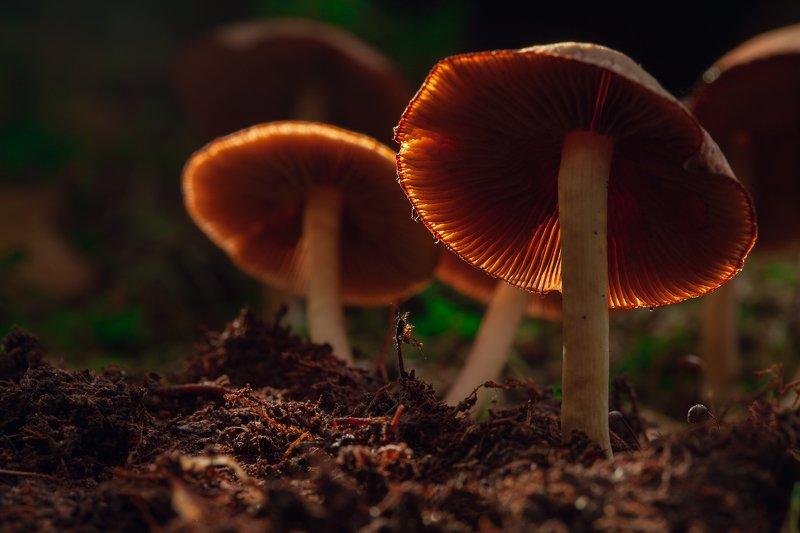 макро, грибы. светятся В СУМЕРКАХphoto preview