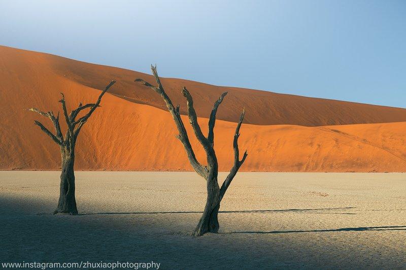 намибия Ископаемые деревья в древней пустыне Намибии.photo preview