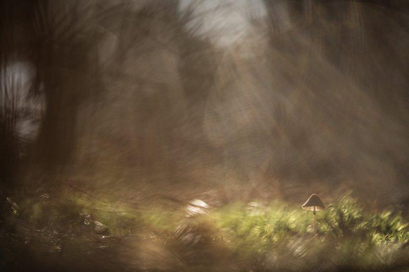 макро, гриб, поганка, свет, цвет, осень, мох, воронеж, Погружаясь в осень...photo preview