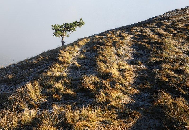 крым, горы, осень, ай-петри, сосна Осенний вечер на Ай-Петриphoto preview