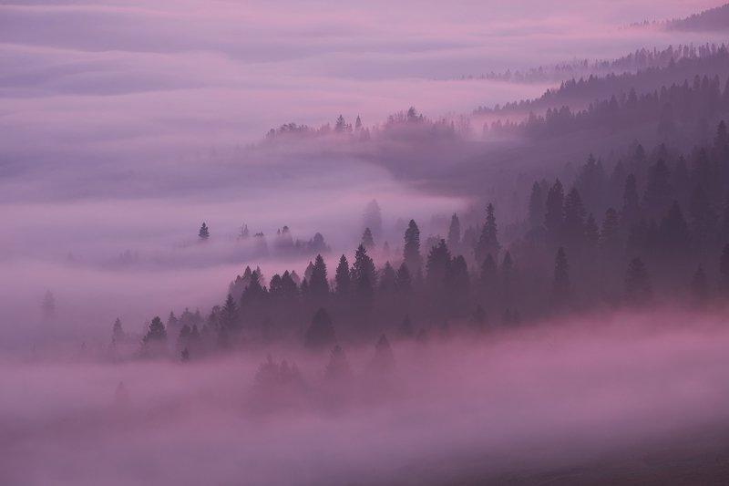 mist,mountains,fog,sunrise,tree Mist9photo preview