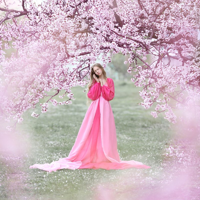 цветущие сады, цветущий сад, сакура, цветение, весна photo preview