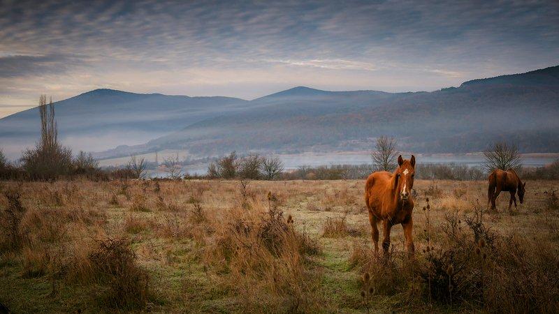 крым, пейзаж, утро, долина, лошадь, Утро Байдарской долиныphoto preview