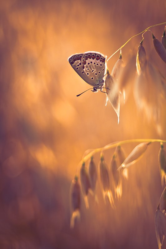 butterfly, nature, summer photo preview