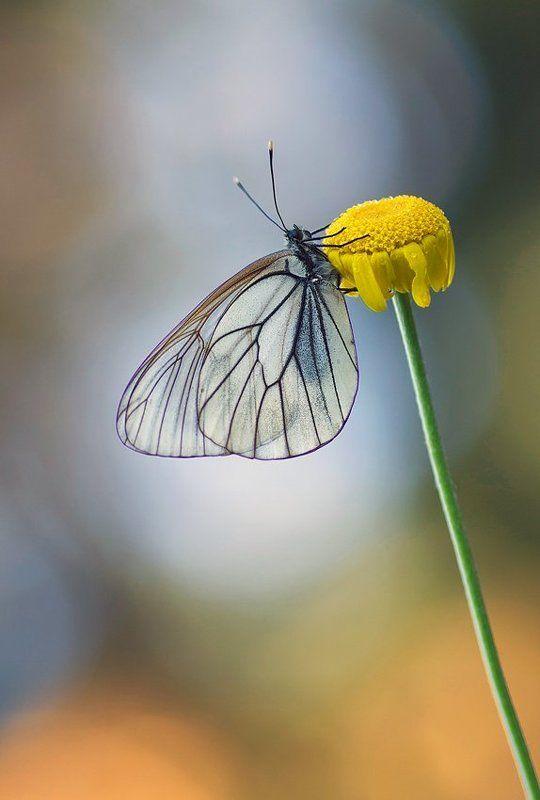 утренние бабочки 2...photo preview