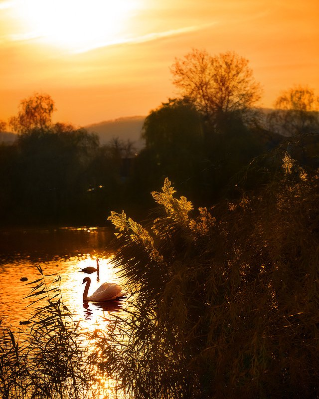 Лебединое озеро. Закат.photo preview