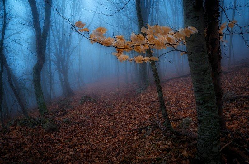 крым, водопад, лес,  пейзаж, деревья, россия,  осень, туман Последняя осень...photo preview