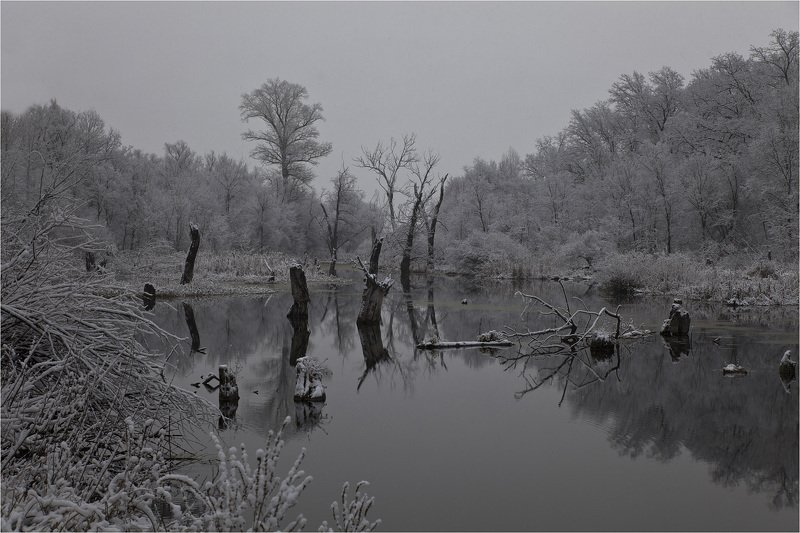 первый снег *photo preview