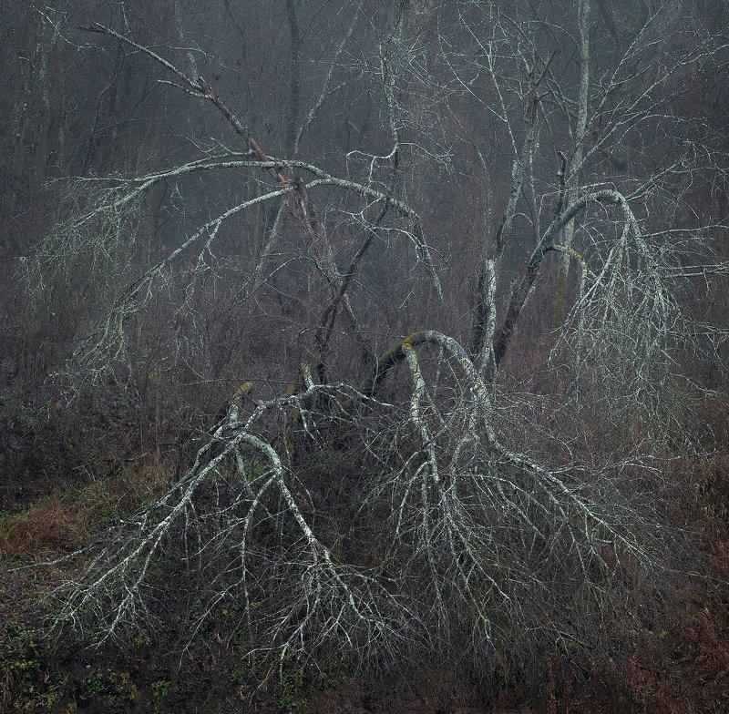 Тайны подмосковного лесаphoto preview