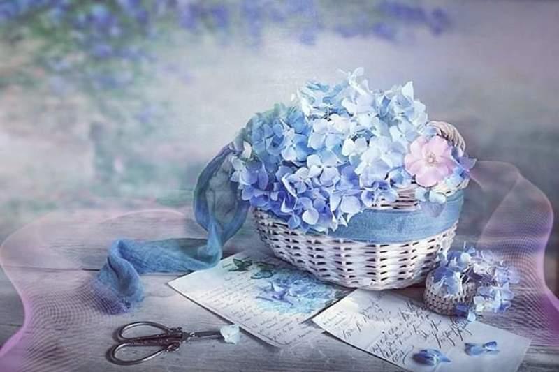 Натюрморт лето корзина голубая Гортензия букет ножницы письма  Утро, новый день, новые надежды... photo preview