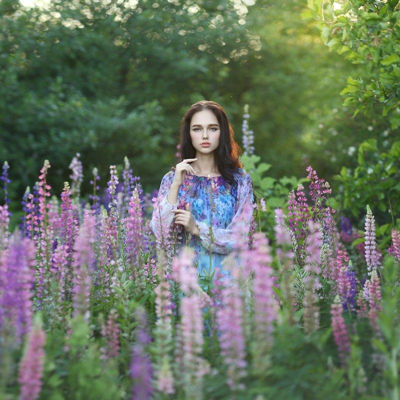 лето, люпины, цветение, девушка с люпинами, сиреневый photo preview