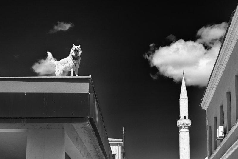 Собака на крышеphoto preview