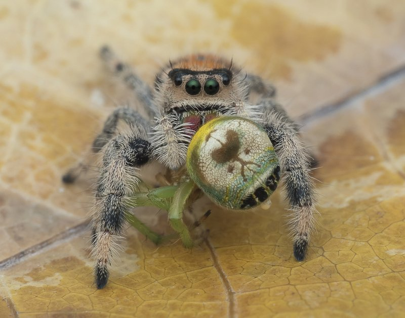 #spider#prey#colors Spider With Prey 191205Aphoto preview
