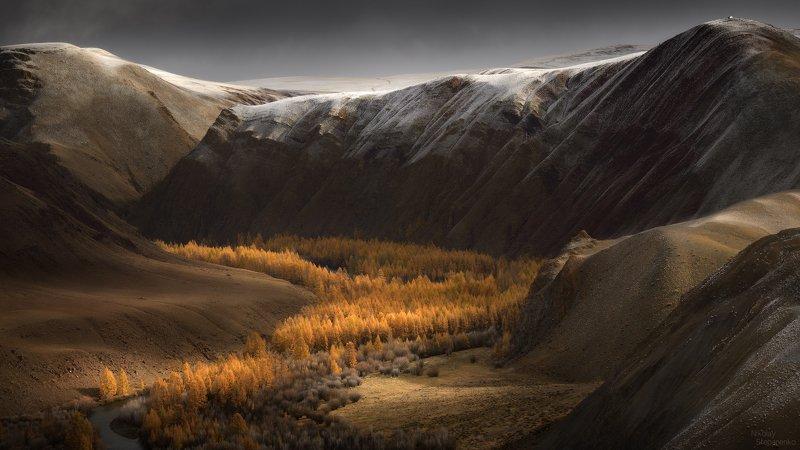 алтай, горы, чуйская степь,долина, осень, лиственницы, чуя Долина осениphoto preview