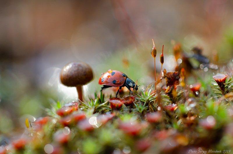 божья коровка, мох, весна, апрель, макро, природа, украина Макроджунглиphoto preview