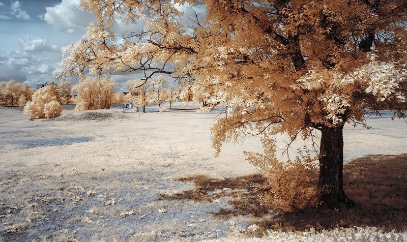 парк, деревья, лето, инфракрасная фотография Оранжевое настроение.photo preview