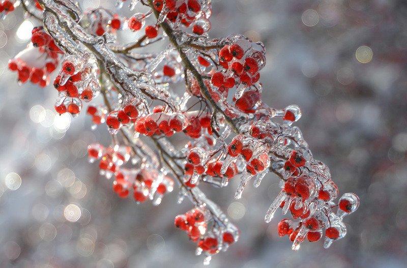 Леденцы от Деда Мороза...photo preview