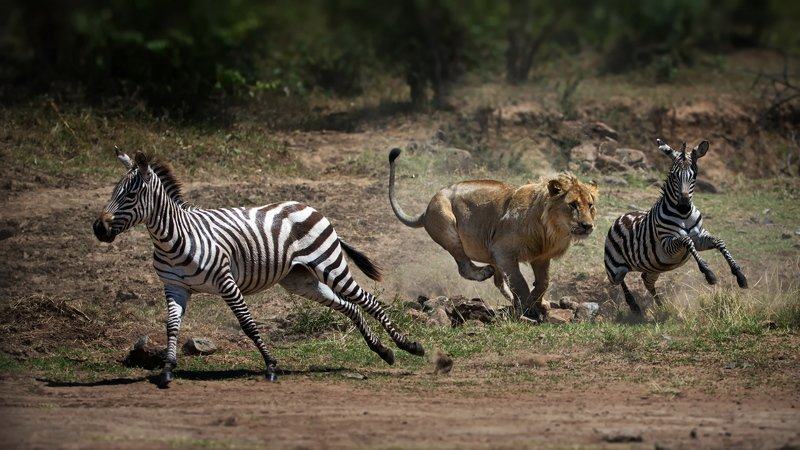 Не ходите, дети, в Африку гулять... (Лайт-версия)photo preview