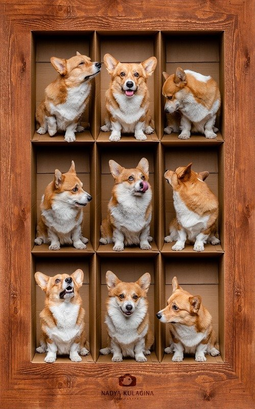 dog, fun, box, boxing, photoshop, creative, level, floor In the Boxphoto preview