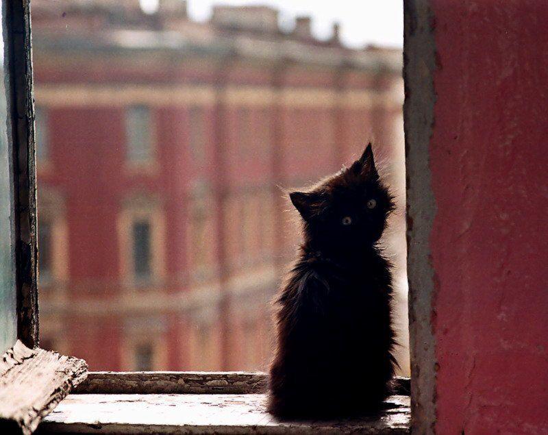 котенок, окно, подоконник, окно, надежда, ожидание, одиночество. Надежда.photo preview