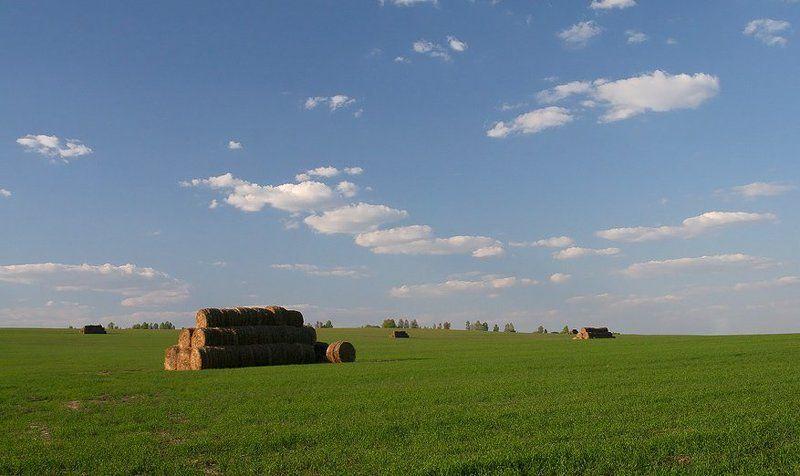 поле, сено, трава, луг, небо, облака Где-то под Калугойphoto preview