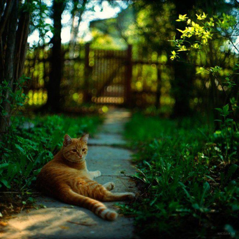 дача, кот, весна ***photo preview