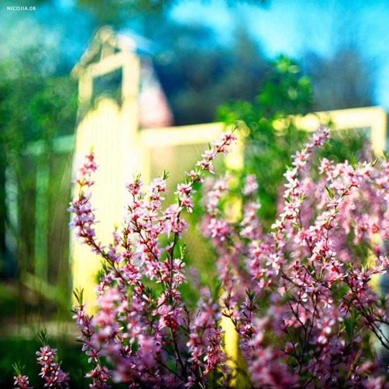 дача, цветы, весна ***photo preview