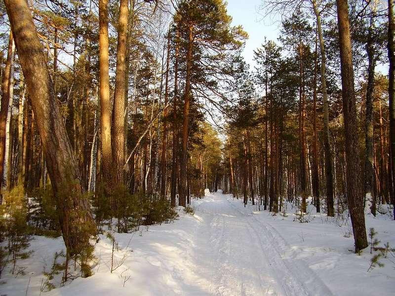 весна, лес, снег Мартовский лесphoto preview