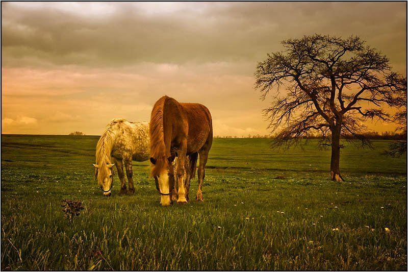 кони , лошади Двойное удовольствиеphoto preview