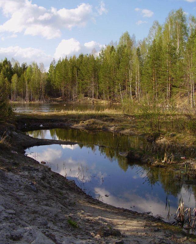 весна, лес, вода, отражение Весенняя прогулкаphoto preview