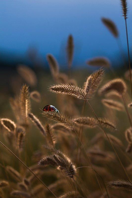 макро, природа, nature, macro, насекомые, insect, ladybug, божьякоровка А помните было лето?photo preview