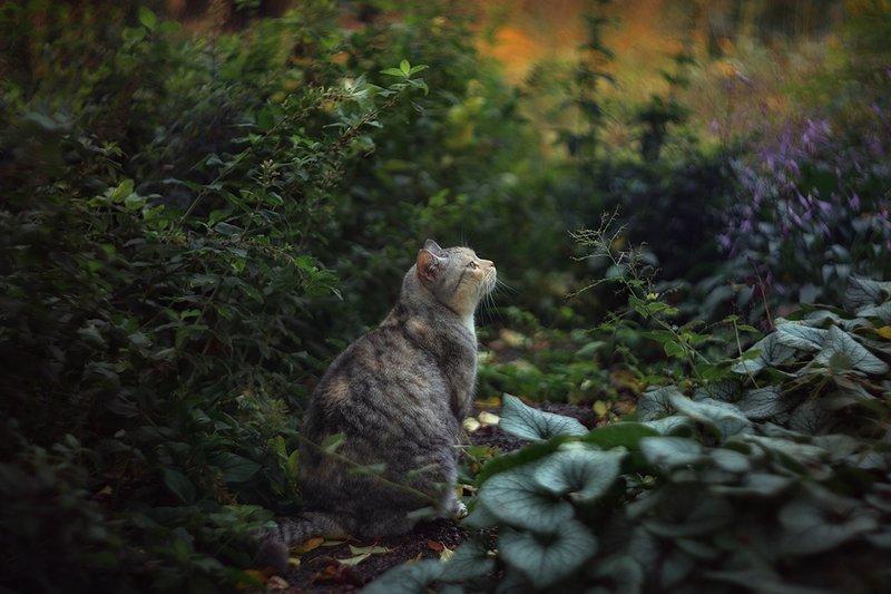 Ботанический сад им. Петра Великого. Октябрь 2019г.photo preview